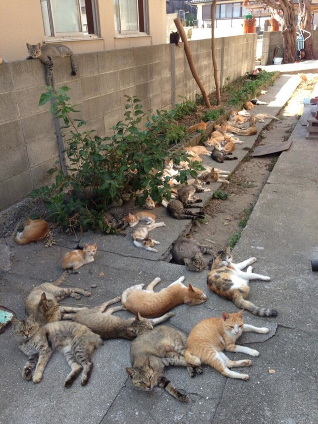 I would love to take a nap with all these kitties.